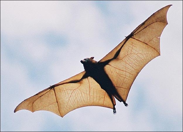 Bat-picture
